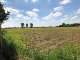 A Mantova in calo il prezzo dei terreni, aumentano le contrattazioni